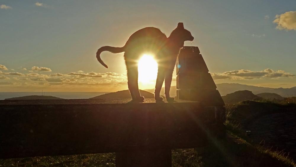 Katze am Miradouro