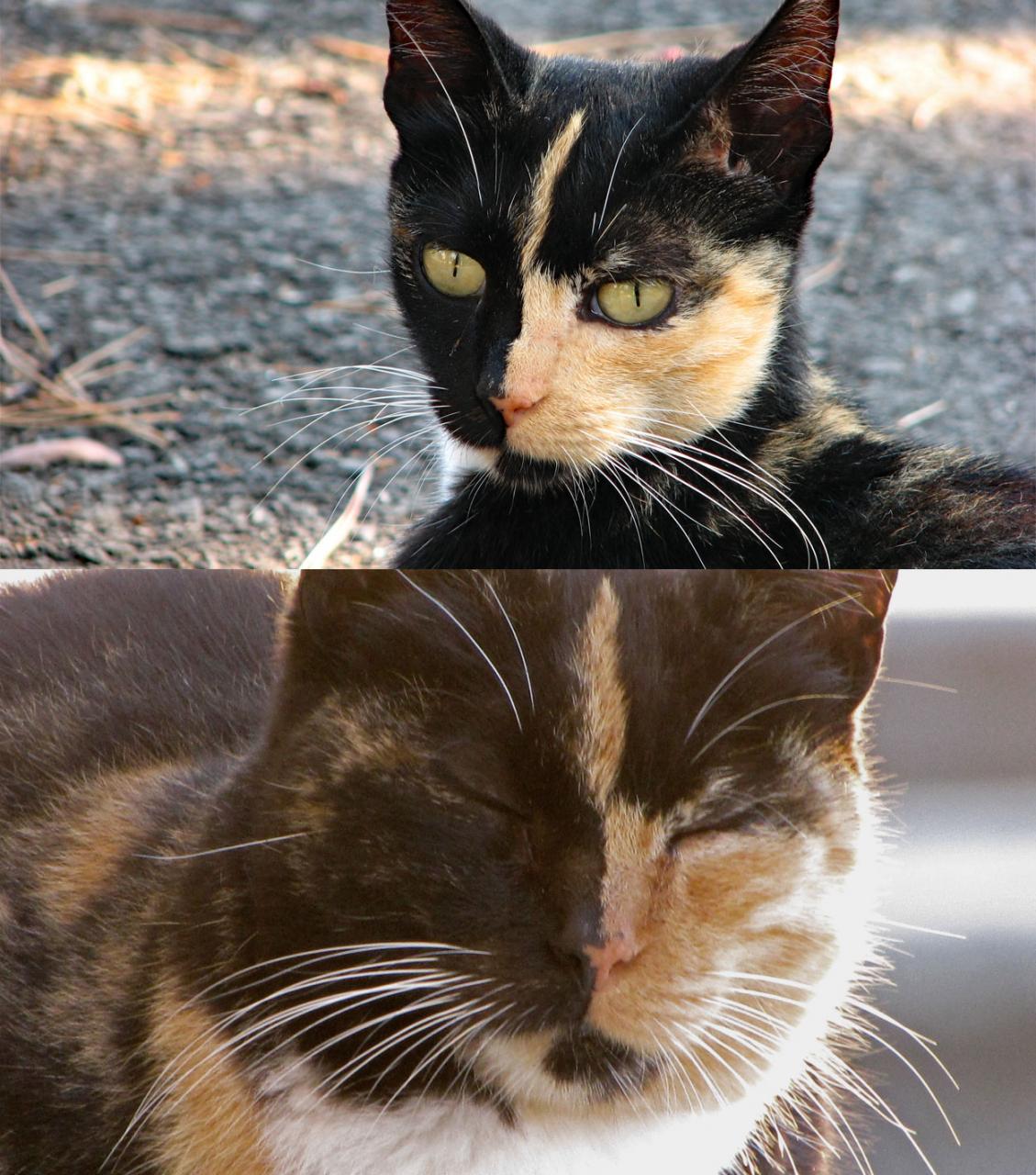 Cascais Katze 2006 / 2010